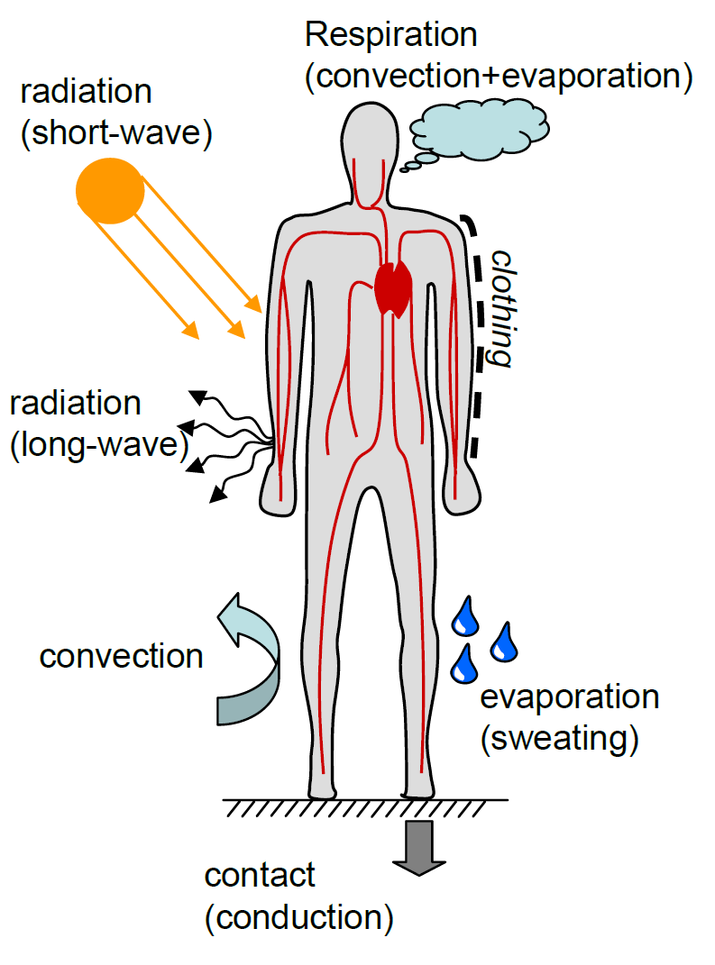 Schematic demonstrating various Environmental Effects Acting on a Human Body and its Thermoregulatory Mechanism